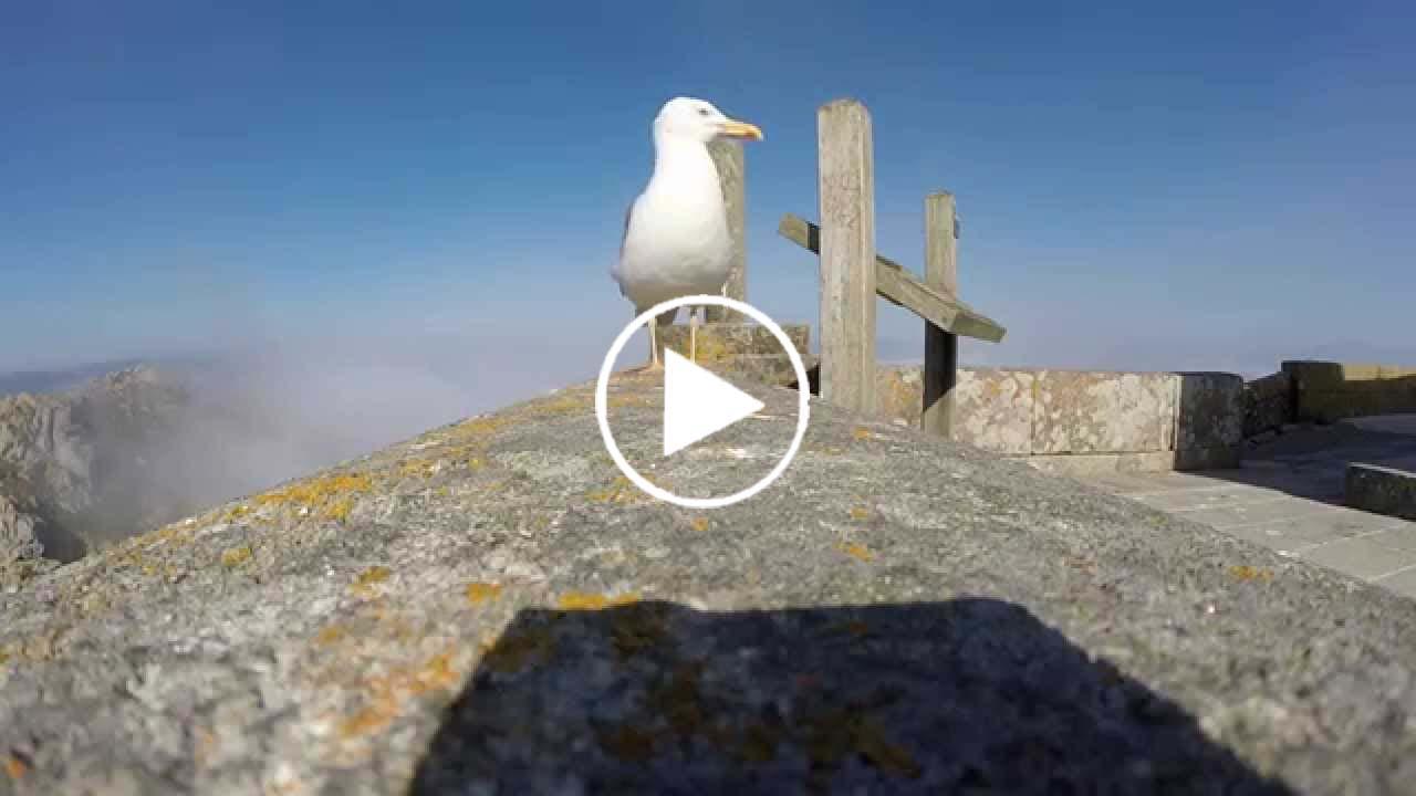 Ils filment un goéland avec leur GoPro quand une chose incroyable va se produire…